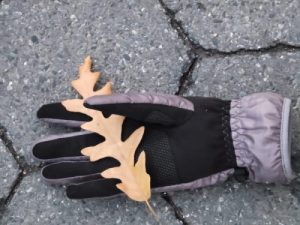 glove, lost glove